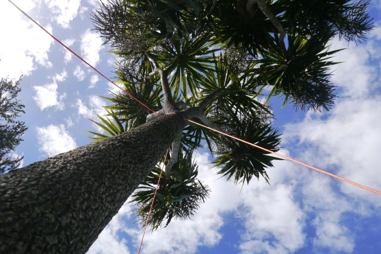 Philippa Nielsen - Tree Support