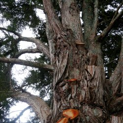 tree-conversations-004