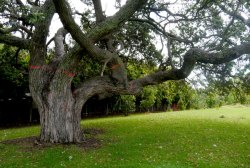 Philippa Nielsen - Tree Conversation 2016
